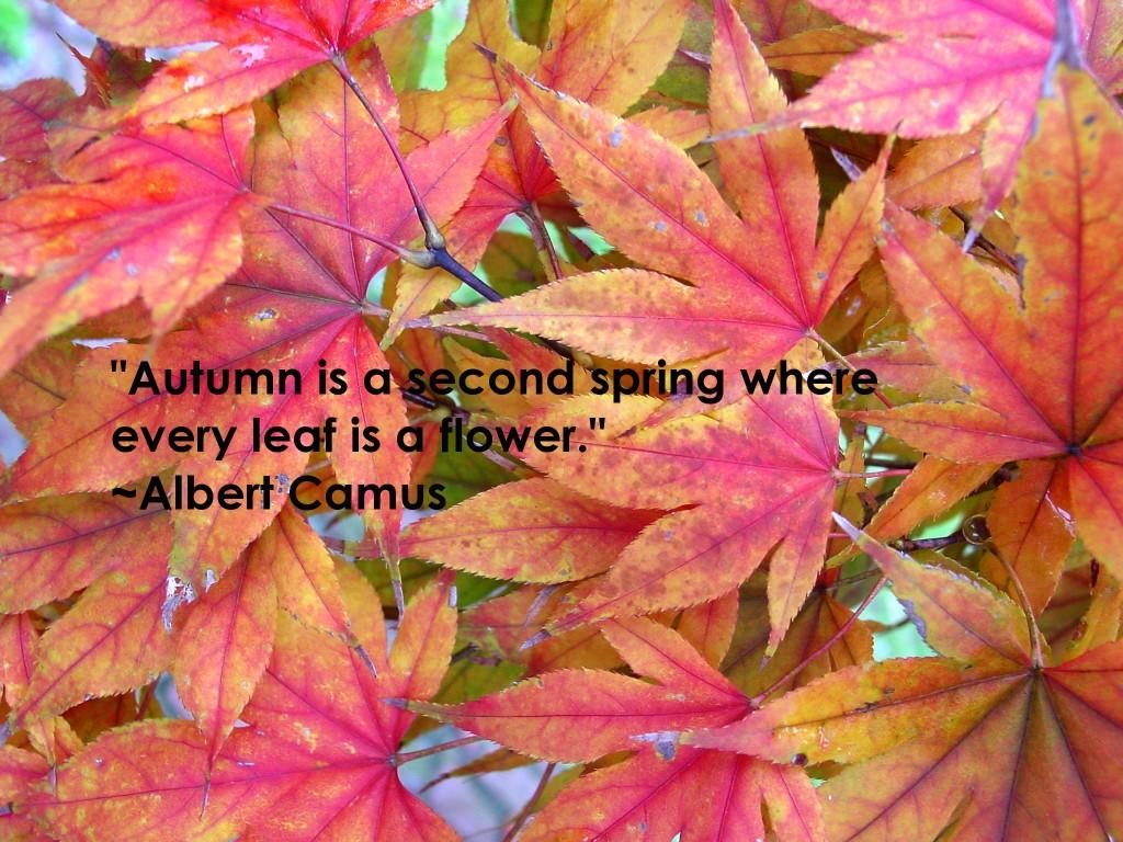 Autumn quote Albert Camus