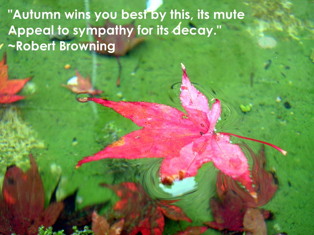 Autumn quote Robert Browning