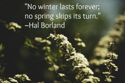 """No winter lasts forever; no spring skips its turn."" ~Hal Borland quote"