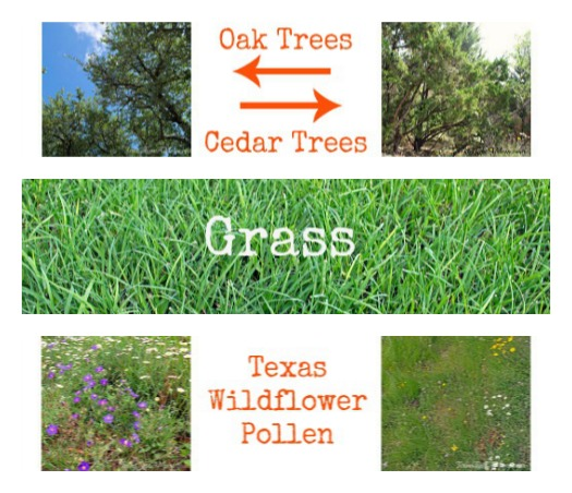 Texas Hill Country Allergen Collage
