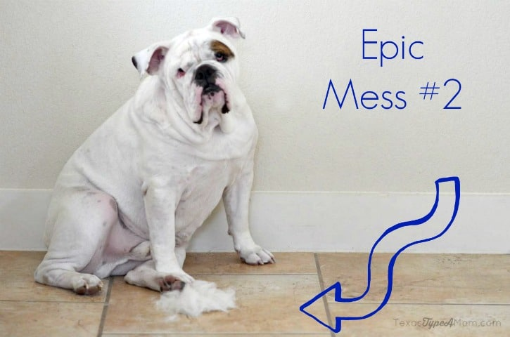 Dog Hair Epic Mess 2 #EurekaPower #ad