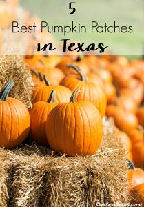 Fall is here! Head out and have some family fun at the 5 Best Pumpkin Patches in Texas! #pumpkinpatches #pumpkins #pumpkinpatch #pumpkinstexas #texaspumpkins #texasfall #fallintexas #fall #halloween #texas #texastravel #texasliving #fallbucketlist