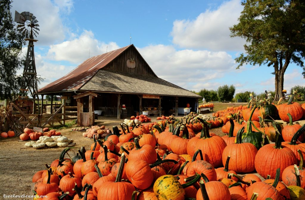 Fall is here! Head out and have some family fun at the 5 Best Pumpkin Patches in Texas!