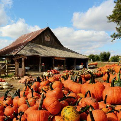 5 Best Pumpkin Patches in Texas