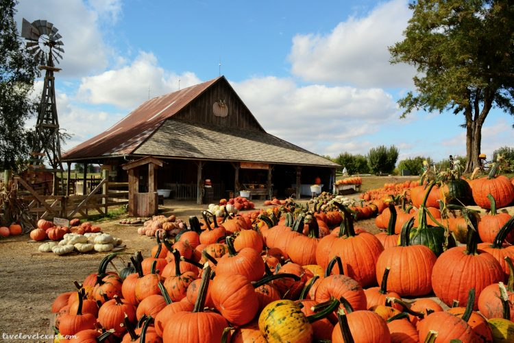 5 Best Pumpkin Patches in Texas