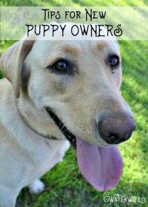 Tips for new puppy owners.