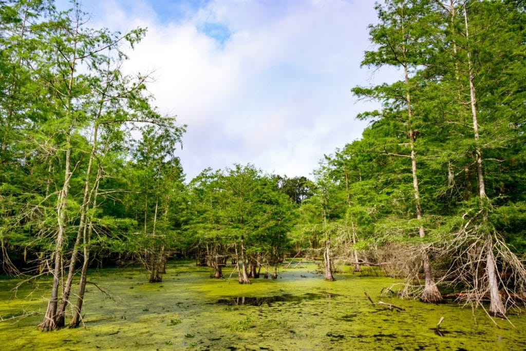 Big Thicket National Preserve. Everything's bigger in Texas...even the camping. Discover the best hidden gems in Texas in the 5 MUST VISIT camping spots in Texas!