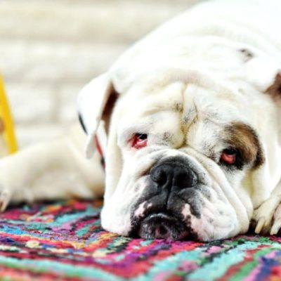 How to Care for a Senior Dog: Everything You Need to Know for a New Stage of Dog Parenting