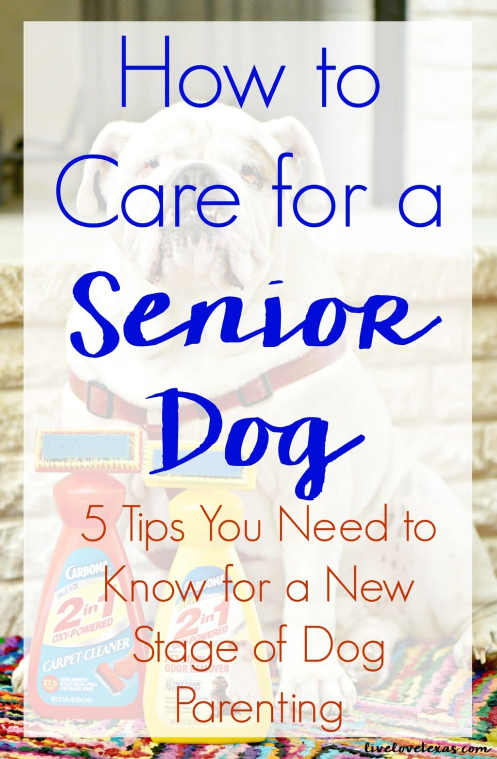 You never really know how to parent until you get to that stage. Take advice from someone that's in the thick of it and learn how to care for a senior dog!