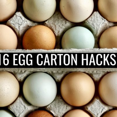 16 Uses for Egg Carton Hacks for Around the House