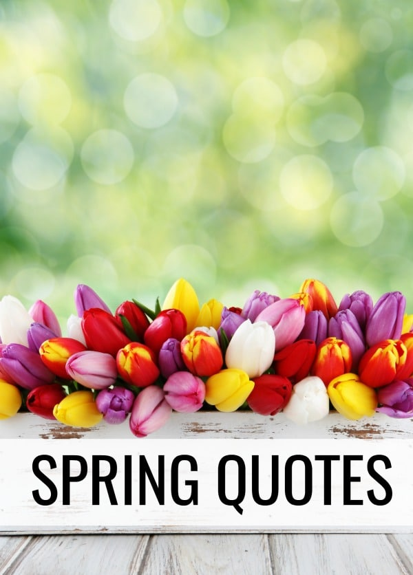 After a long winter, nothing brings new joy and hope quite like spring! These 7 Spring Quotes are sure to inspire you to find the beauty in this season.