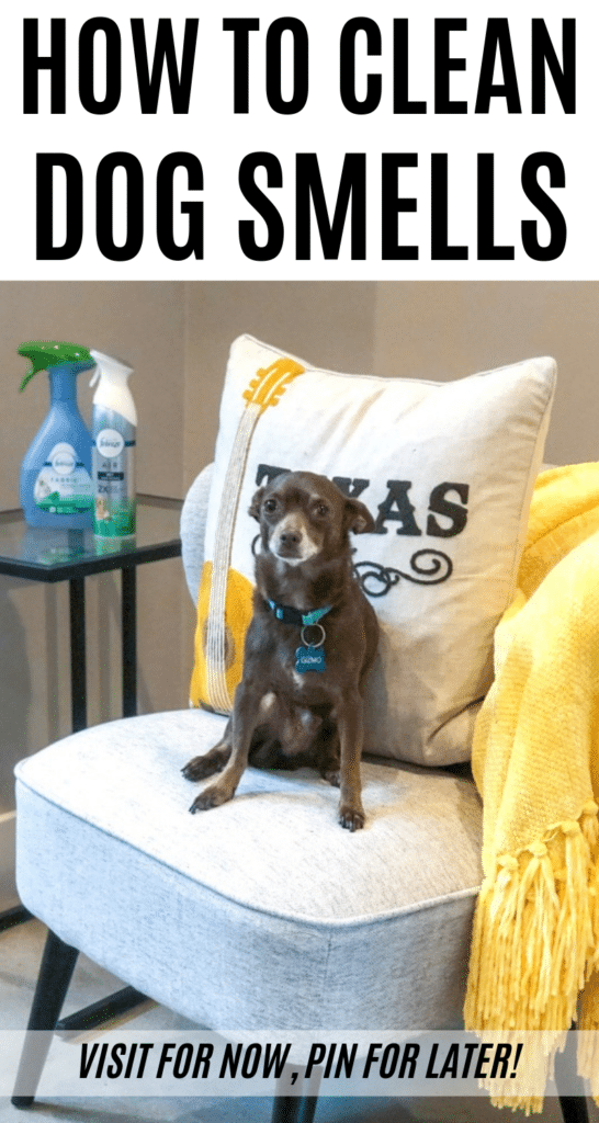 Did you know May is National Pet Month? To show some pet appreciation, I'm going to be sharing how to get rid of five common dog smells. Plus, why every dog owner needs our sponsor, Febreze, on hand to help! #DontSweatYourPet #ad